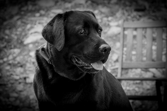 Black and White Dog by namaste04-Flikr
