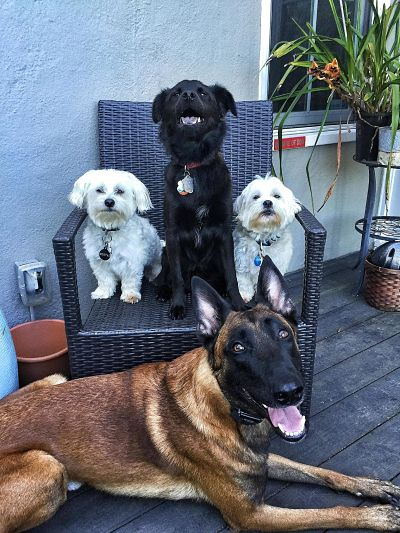 Dog Family by Marie