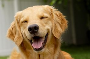 Happy-Dog-Google-stock