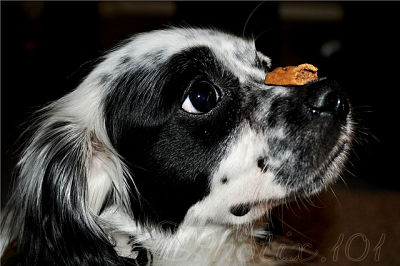 Dog with treat via Foter