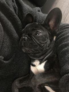 Cuddling Milo