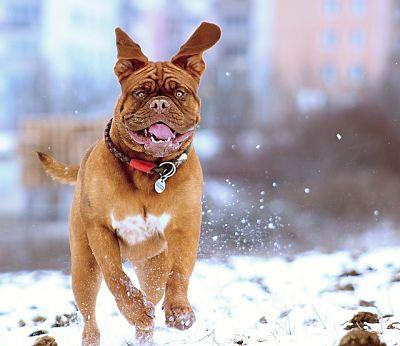Snowdog via Pixaby