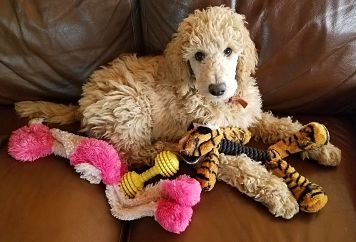 Winston and Toys
