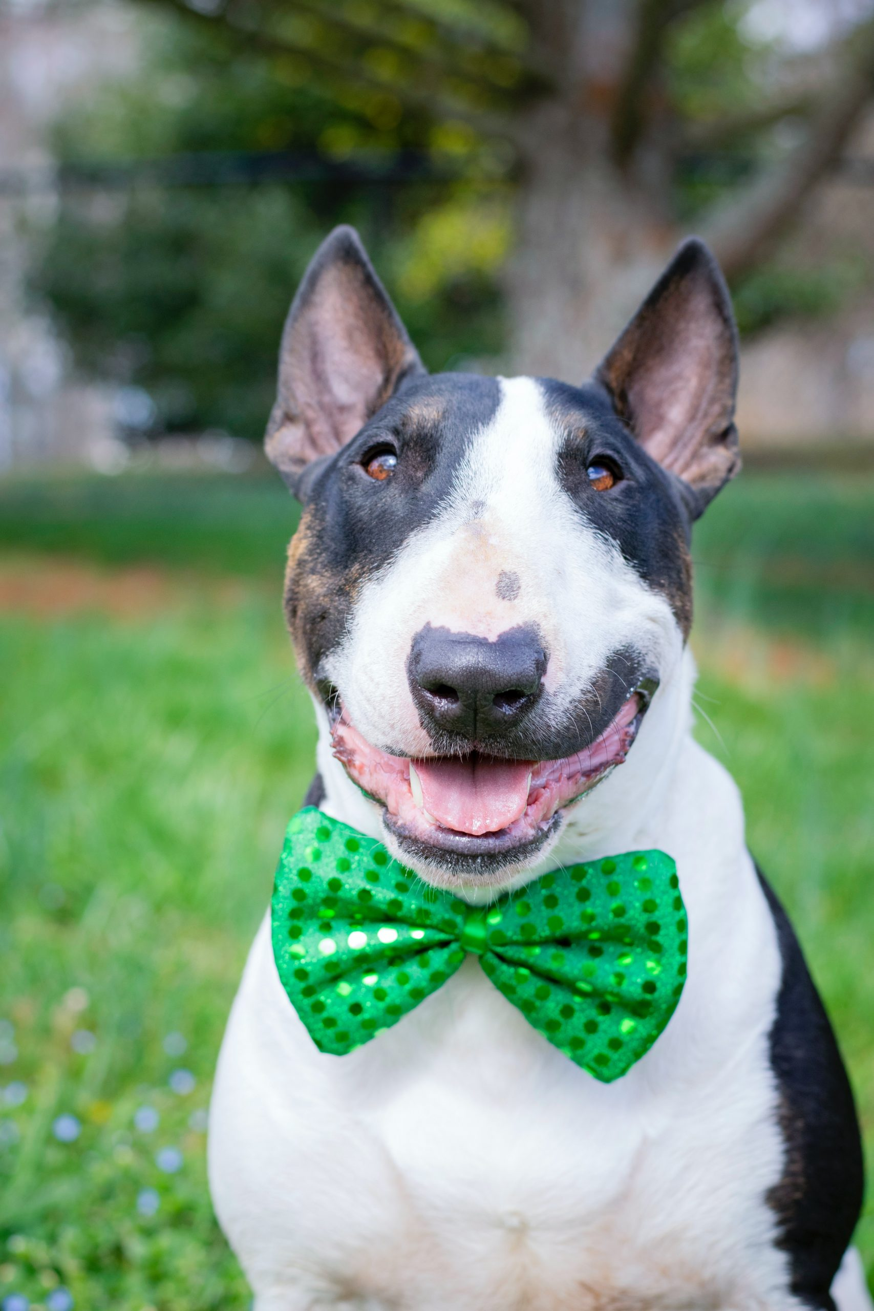 Celebrate St. Patrick's Day with your lucky dog!