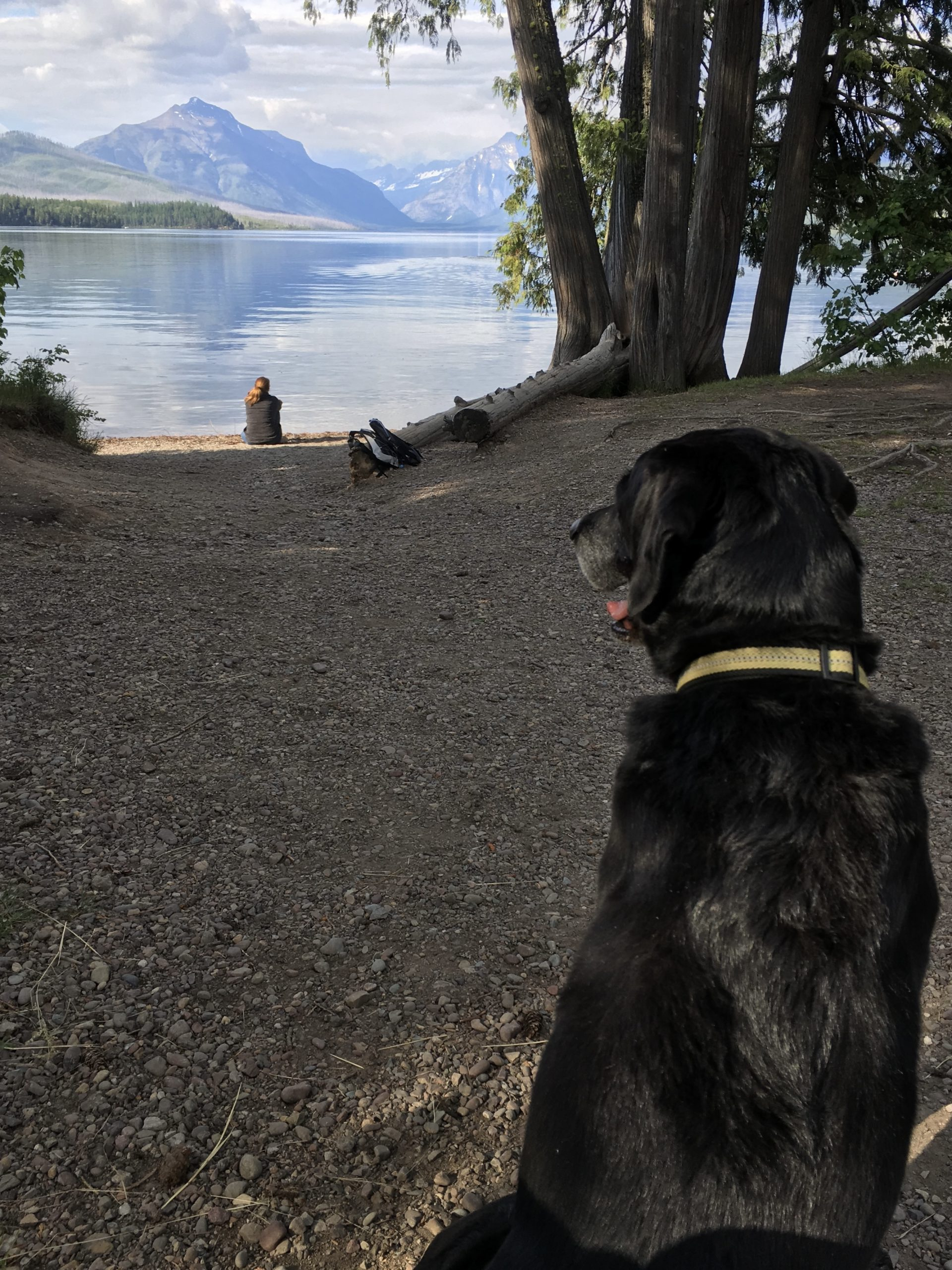 dogs can visit national parks