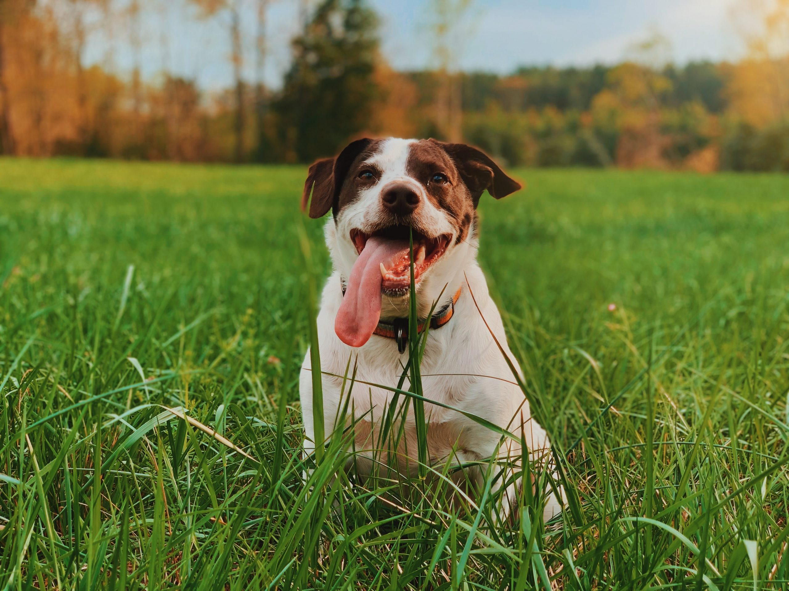chemicals used to keep your lawn green can be harmful to your dog