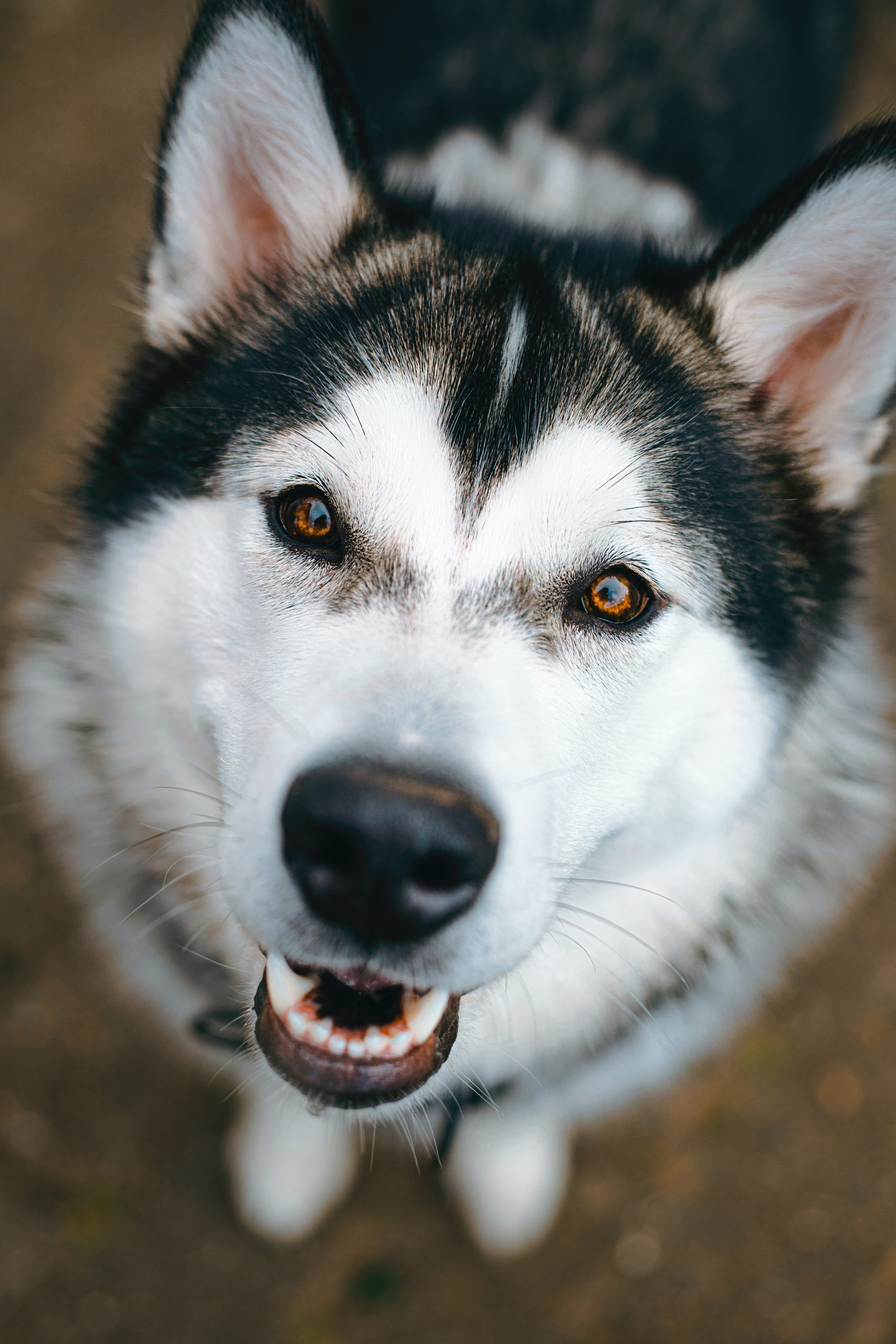 protect your dog's health by taking care of his teeth